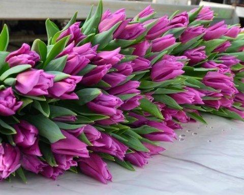 В Україну незабаром прийде справжня весна