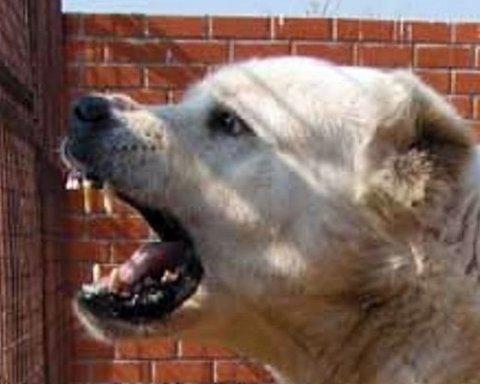 """Три """"пса-людожера"""" пошматували жінку, є подробиці"""