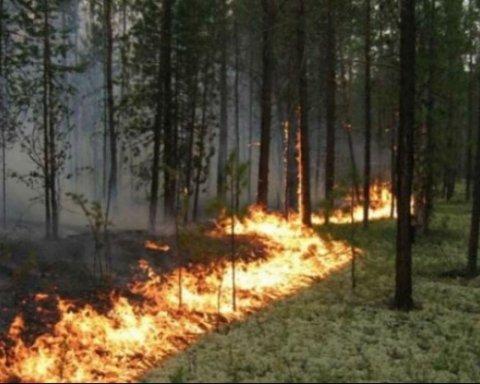 Полторы сотни людей борятся с масштабным пожаром на Харьковщине: подробности
