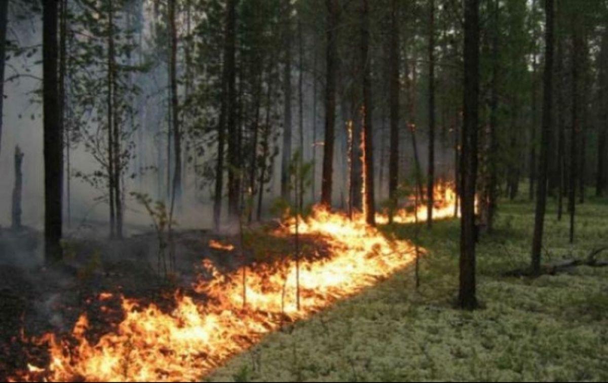 У РФ почалися масштабні лісові пожежі: влада вирішила не гасити вогонь