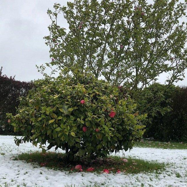 Холодное дыхание зимы: впоследний день апреля воФранции заснежило