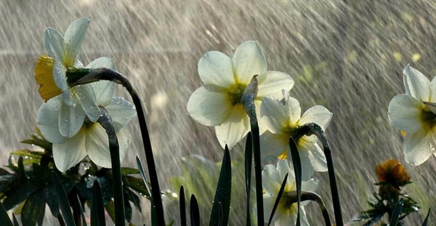 Дощі та похолодання: синоптик пояснила, звідки з України піде тепло