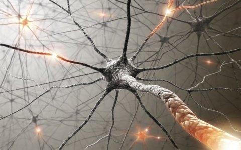 Обнаружили новое свойство клеток мозга