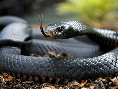 Как выжить после укуса змеи: украинцам дали действенные советы