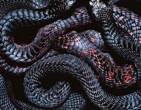Масові напади змій у Києві: як поводитись і що робити при укусі