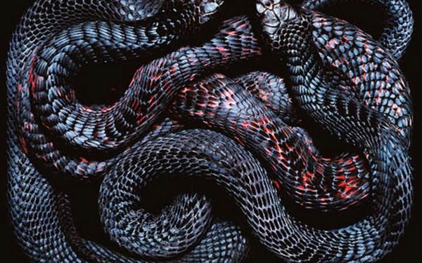 Киевлян предупредили о засилье змей в столице