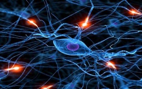 Як відновити нервові клітини: медики пояснили