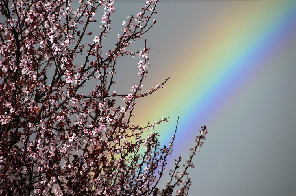 Тепло не задержится: синоптик рассказал, какой будет погода в начале апреля