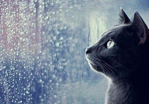 Синоптики обещают тепло, Карпатам – сильные дожди