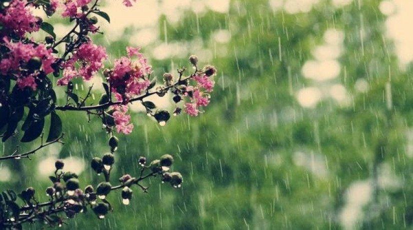 До +31 градуса и дожди: появился прогноз погоды на сегодня