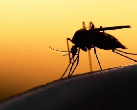 Как защититься от комаров: назван простой и действенный способ