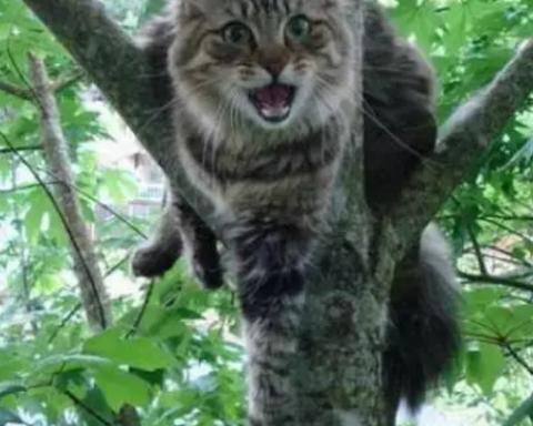 """""""Шокуючий душ"""": рятувальники брандспойтом знімали кота з дерева (відео)"""