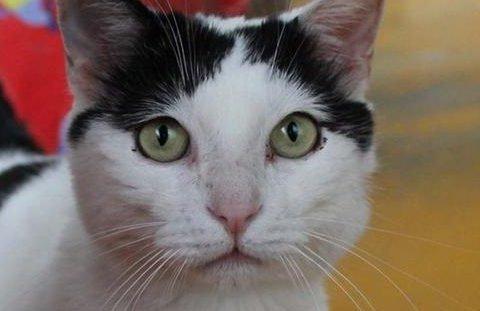 1,5 мільйона євро у спадок отримав кіт в Італії