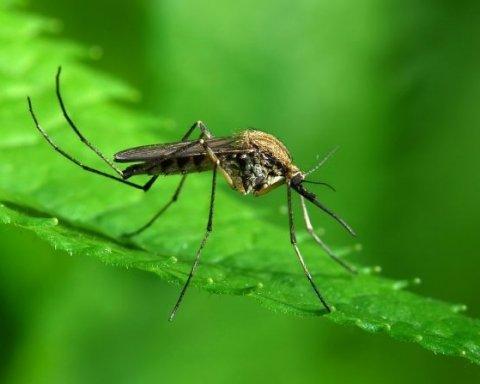 Захист від комарів: 5 способів відлякати шкідників