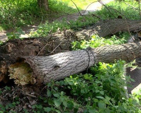Трагедія у Черкасах: на групу школярів впало дерево