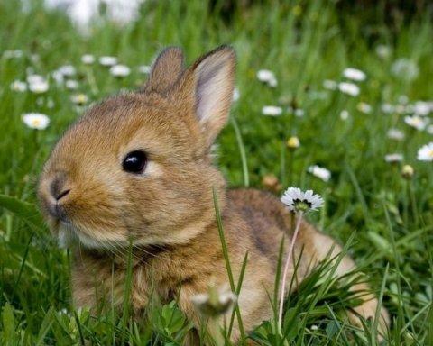 Хитрый кролик убежал от кошки, но угодил в когти совы: видео
