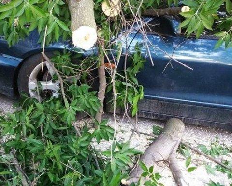 Огромная ветка придавила четыре автомобиля в Киеве: фото