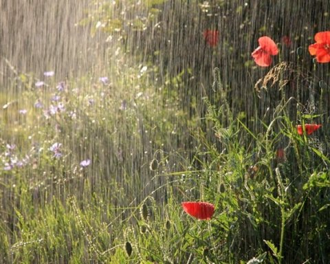 Україну заллють дощі та накриють грози: яким областям чекати негоди