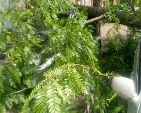 В Одесі величезне дерево впало на три автомобілі