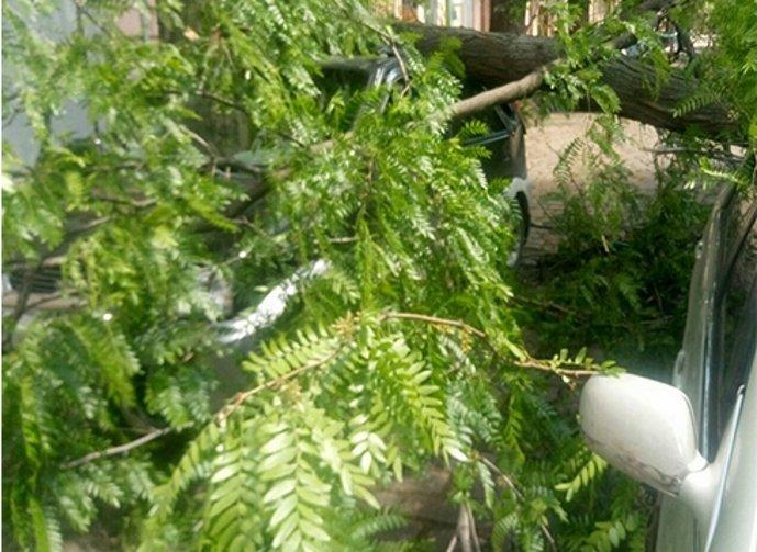 В Одессе огромное дерево рухнуло на три автомобиля