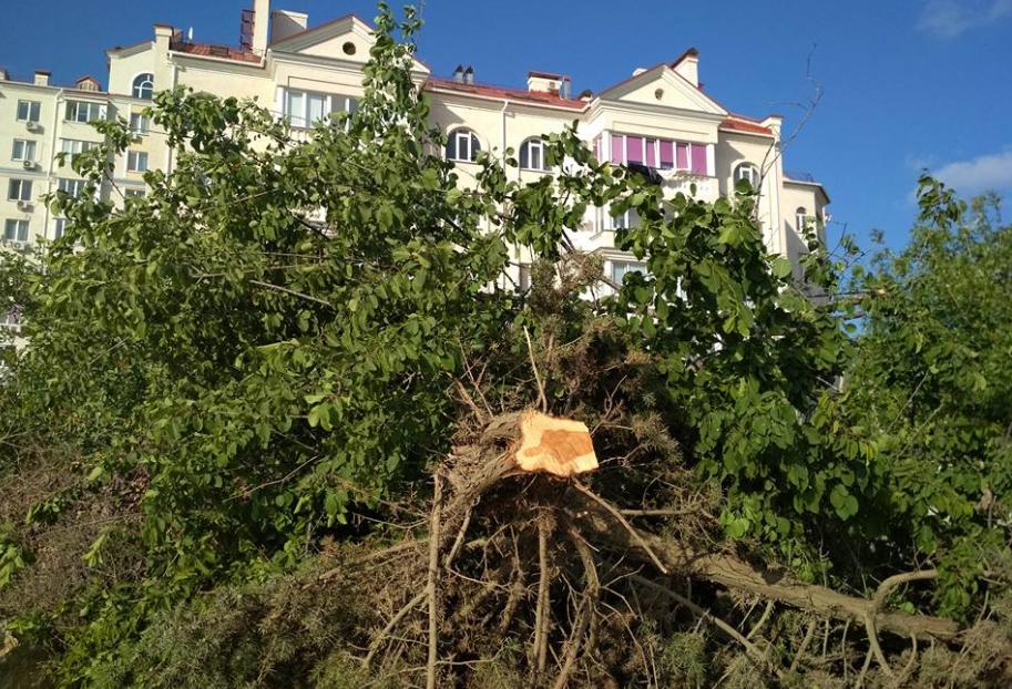 Оккупанты начали уничтожать деревья из Красной книги в Крыму: появились доказательства