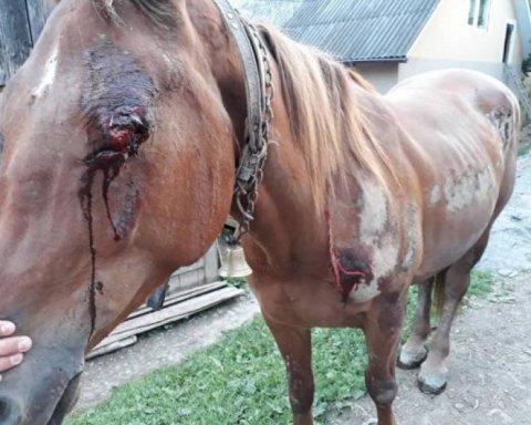 Неадекватний чоловік ледь не вбив коня, прив'язавши його до авто: моторошні кадри