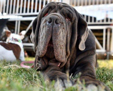 Какая собака стала самой уродливой в этом году: обнародованы снимки