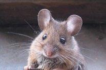 Мыши съели деньги в банкомате