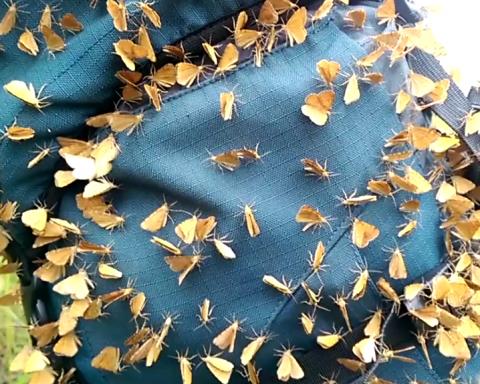 »Боевые бандеровские бабочки»: появилось впечатляющее видео из Карпат