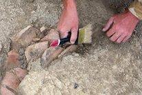 Во Франции найден череп редкого древнего животного