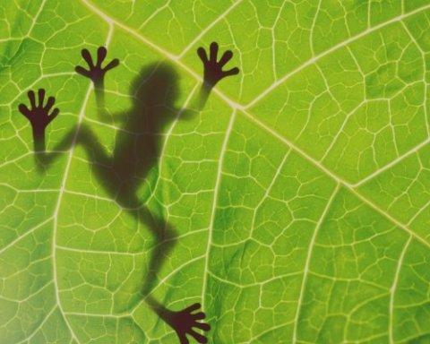 ВНО по биологии: опубликованы правильные ответы