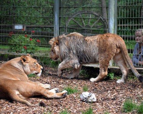 Из зоопарка в Германии сбежали опасные хищники