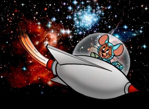 Мышей отправили в космос, чтобы людям лучше спалось