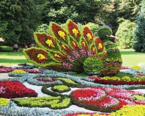 Гігантські квіткові інсталяції виставлять на Співочому полі у Києві