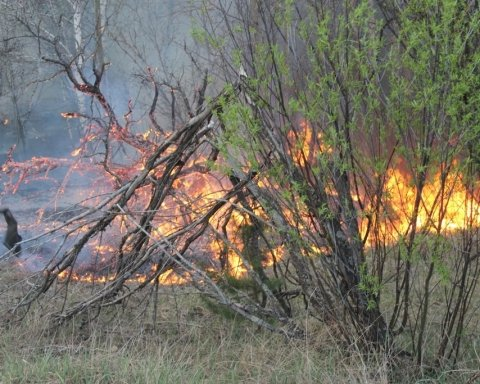 Біля Чорнобиля знов запалала пожежа