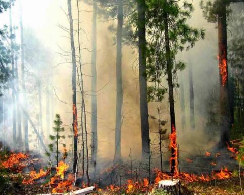 Швеція потерпає від масштабних пожеж: ЄС б'є на сполох