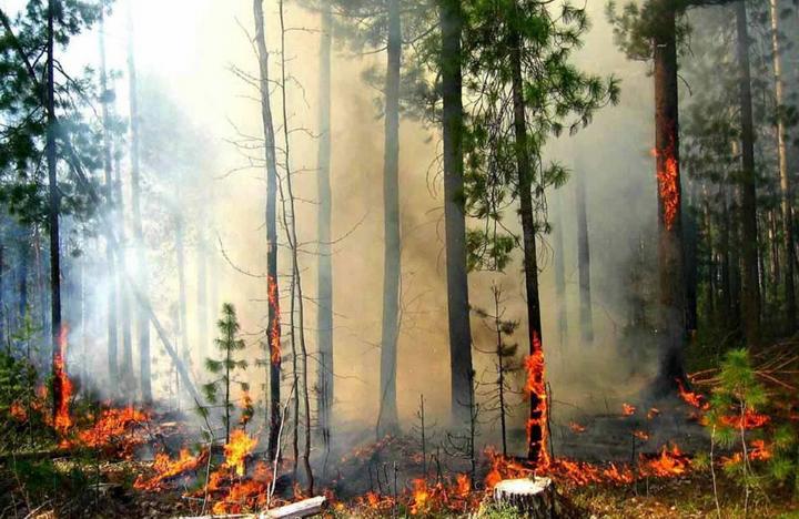 Берегите природу. По стране объявлен максимальный уровень пожароопасности