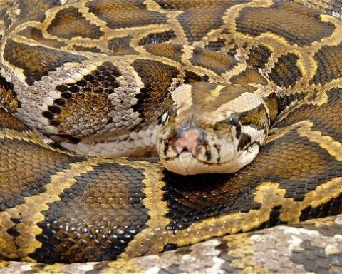 На киевских пляжах заметили огромных змей