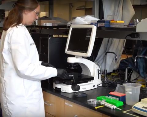 В 25 раз тоньше волоса: нанороботов научили выводить токсины из крови