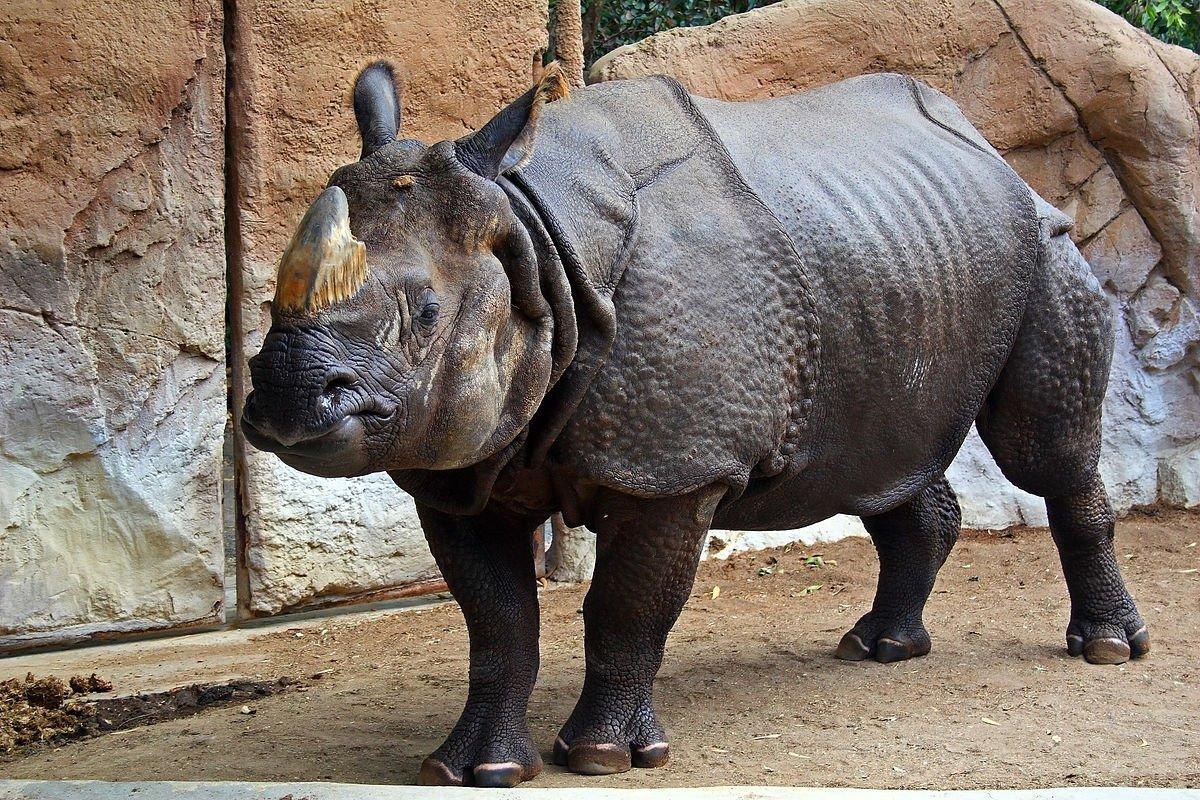 У Кенії при перевезенні до зоопарку загинули 8 носорогів