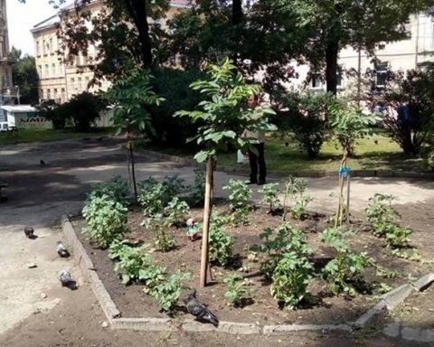 Львовские клумбы внезапно стали огородами
