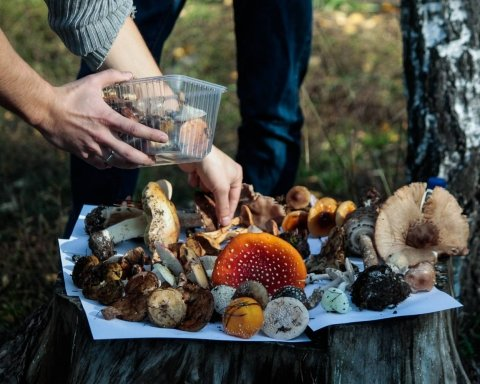 В Харьковской области туристы приготовили обед из ядовитых грибов