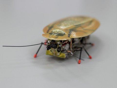 Странное изобретение: ученые создали нового робота