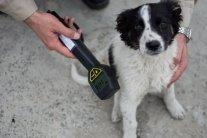 »Радиоактивные» щенки покорили сердца своих новых хозяев