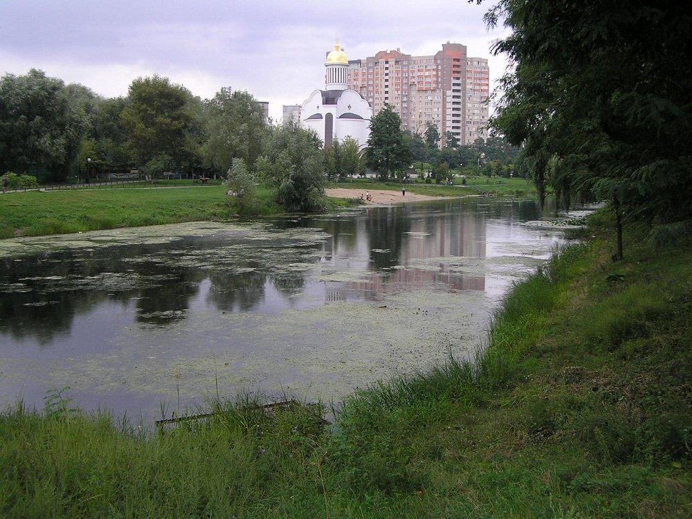 Киевляне начали паниковать из-за массового мора птиц и крыс в городе