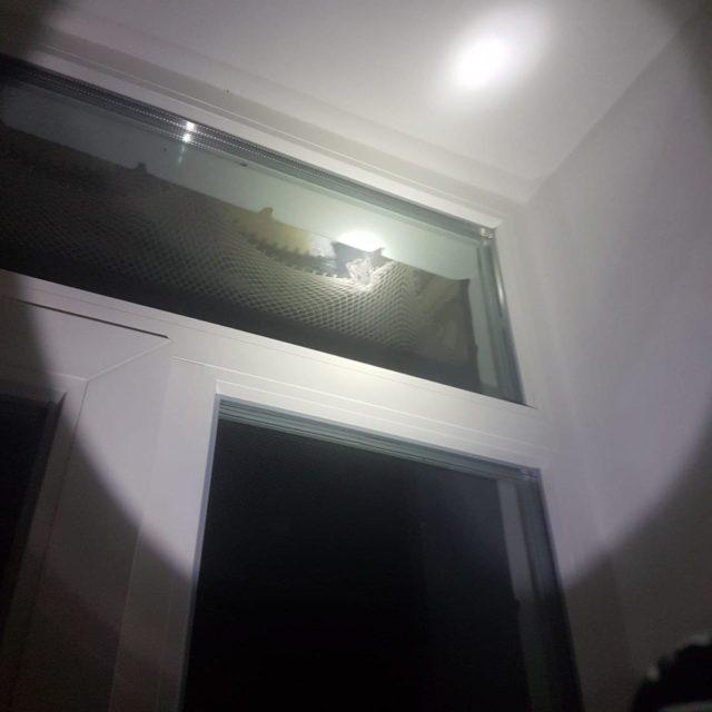Зграї щурів заполонили окупований Крим, бігають навіть у квартирах