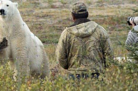 Канадец погиб, спасая детей от белого медведя