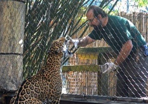У Новому Орлеані ягуар вибрався з клітки і влаштував годинне сафарі