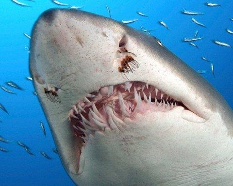 У берегів США акули почали нападати на людей: постраждали діти