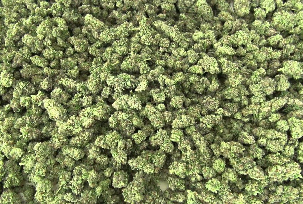 Шкода і користь марихуани: експерти розділилися в думках